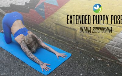 Pose of the Week Guide: Extended Puppy Pose