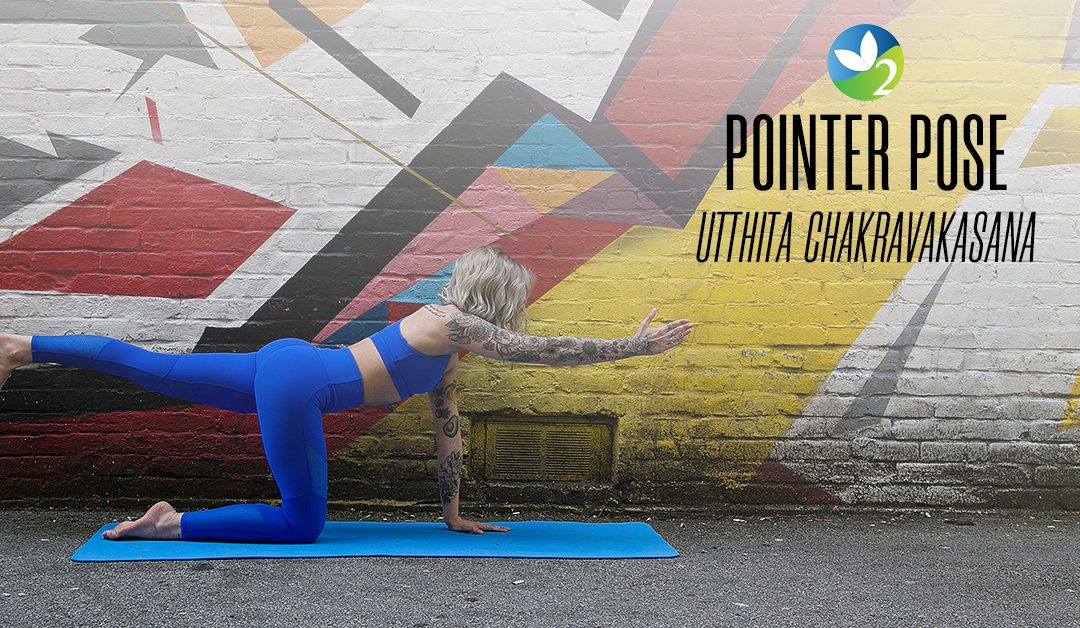 Pose of the Week Guide: Pointer Pose