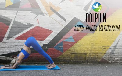 Pose of the Week Guide: Dolphin Pose