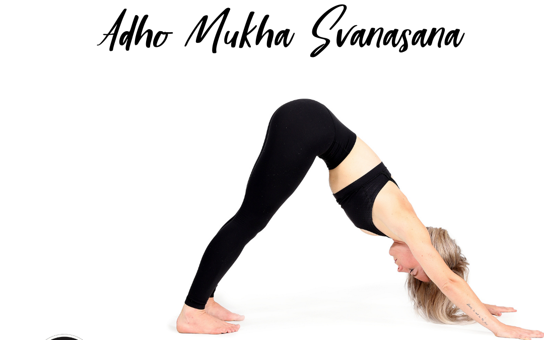 Pose of the Week Guide:  Downward Facing Dog/ Adho Mukha Svanasana
